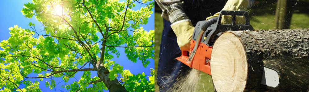 Tree Services Holiday
